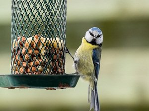 Bird Unhurt By Natural Pest Control