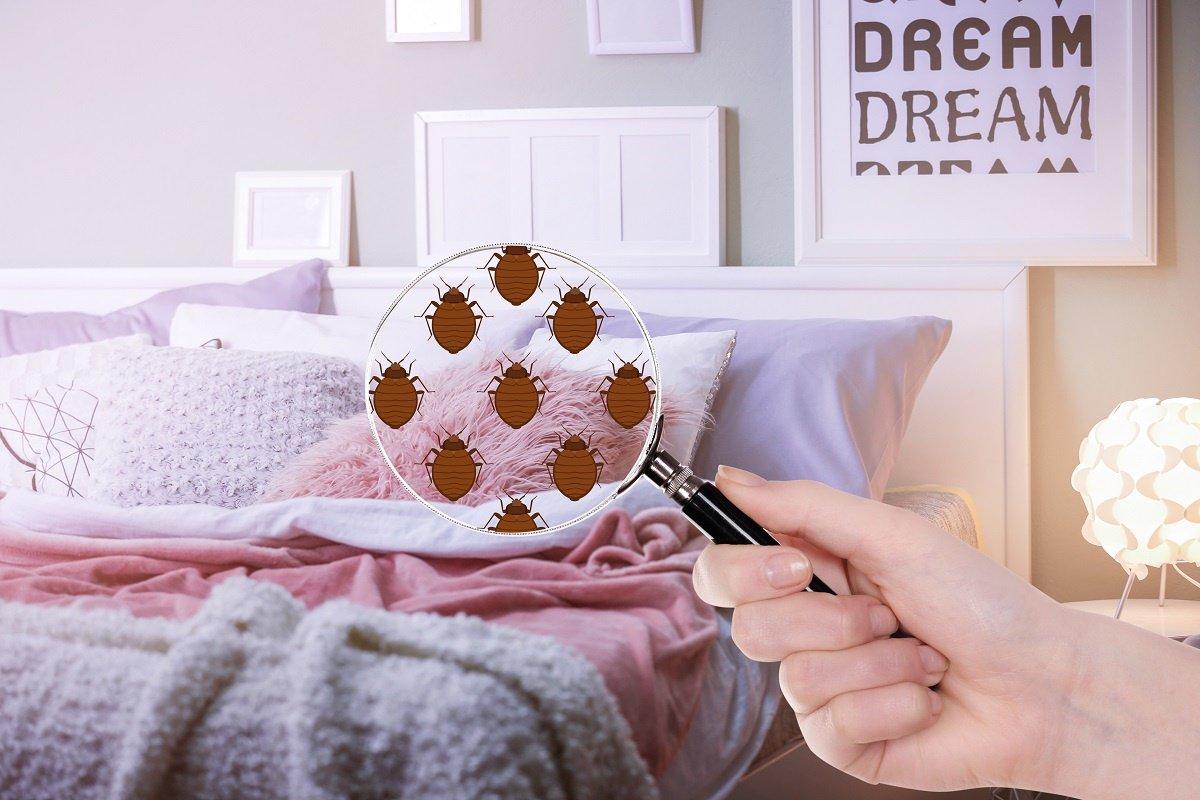 Bed Bugs In Bedroom