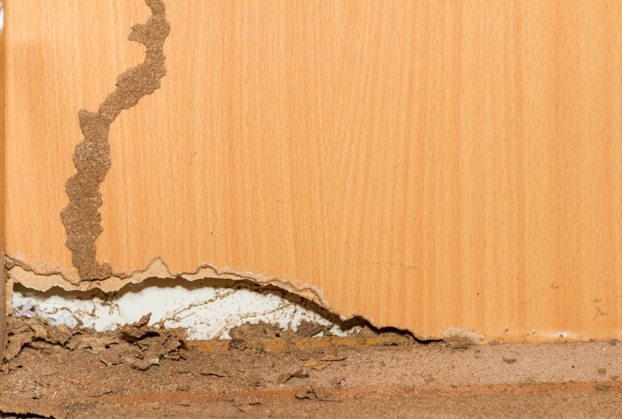Wood Damage From Termites