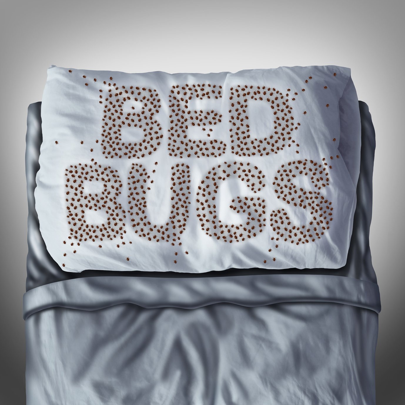 Bed Bug Pillow