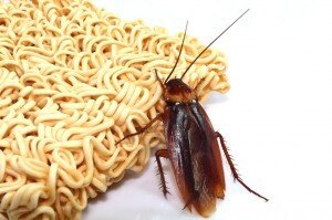 Cockroach Eating Ramen