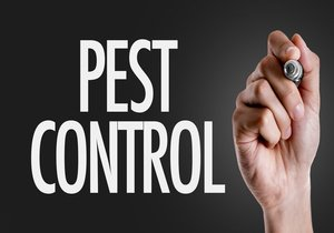 Pest Control Graphic