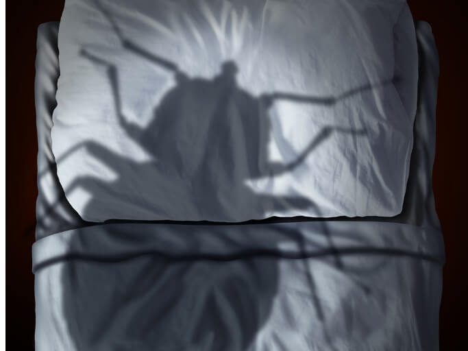 Bed Bug Looming Over Bed In Florida