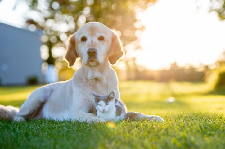 Pest Control Services Safe For Pets