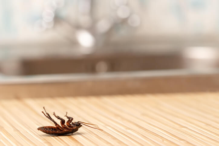 Cockroach Pest Control In Palatka, FL