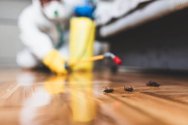 Getting Rid Of Roaches With Pest Control