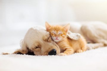 Image for The Most Dangerous Pests For Your Pets