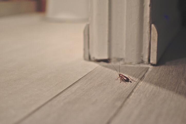 Cockroach On The Floor