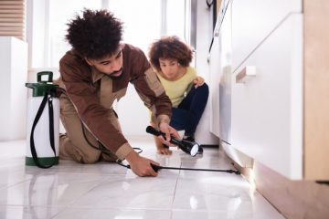 Image for 6 Reasons Why A Clean House Can Still Attract Roaches