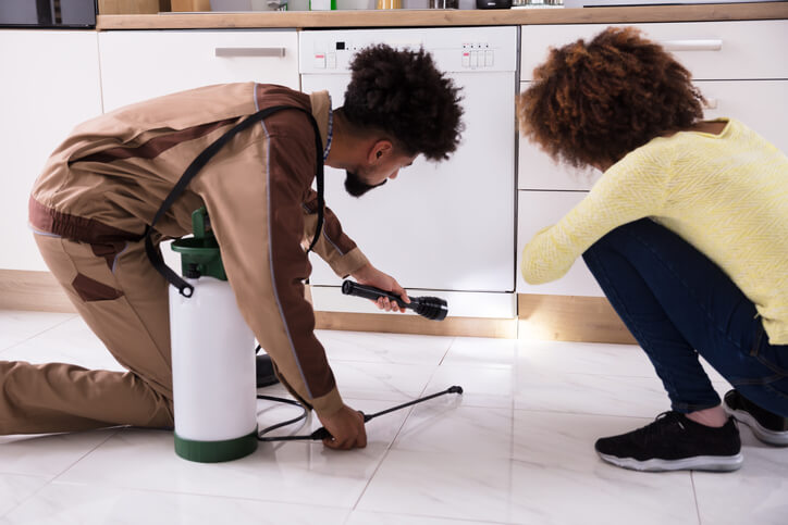 Pest Exterminator Looking For Signs Of Pests