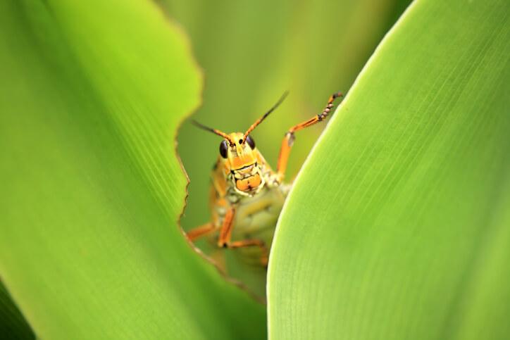 Yard Pest