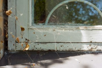 Image for Pest Infestations: 6 Signs To Look Out For