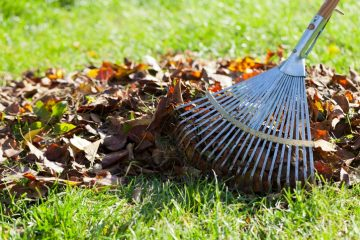 Image for Banish Pests With These Spring Cleaning Tips