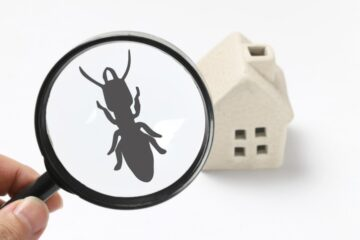 Image for 7 Ways Pests Can Get Inside Your Home
