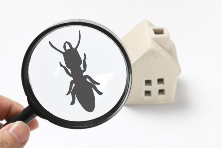 Pests In The Home
