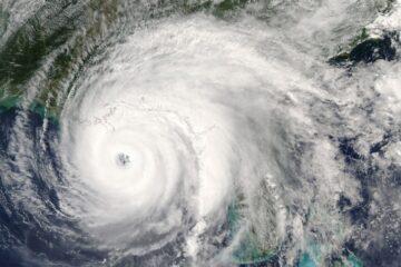 Image for Pest Control For Hurricane Season
