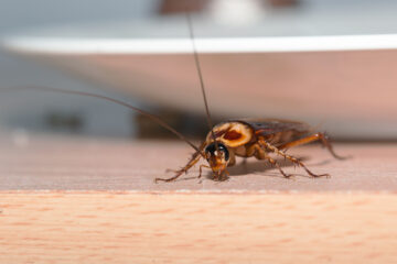 Image for 6 Ways To Prevent Roaches From Getting Into Your House