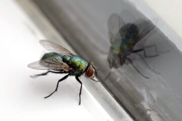 Image for Everything You Need To Know About Flies